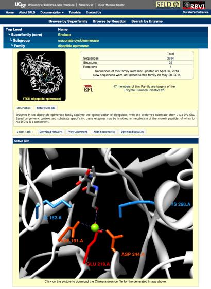dipeptide epimerase